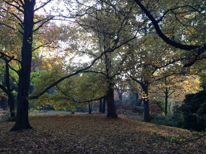 Arboretum Spaeth