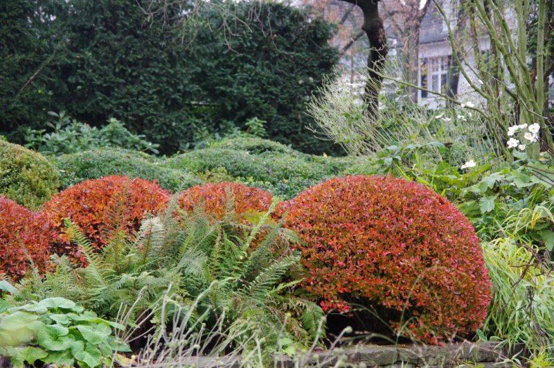 Enkianthus perulatus Herbst © Isabelle van Groeningen