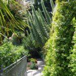Yewbarrow House Echium pininana © Isabelle van Groeningen
