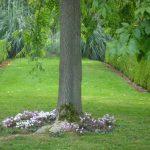 Cyclamen im Rasen © Isabelle van Groeningen