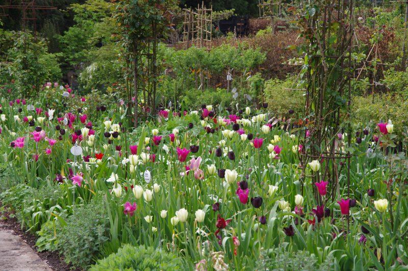 Tulip mixture © Isabelle van Groeningen