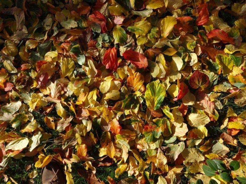 Bunt - Die Farbe des Herbstes © Isabelle van Groeningen