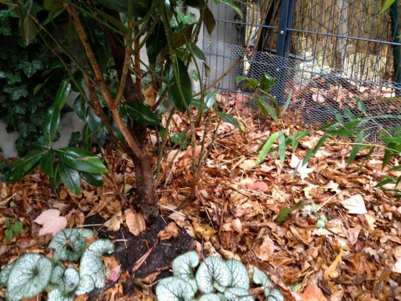 Leaf mulch © Isabelle van Groeningen