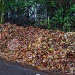 Leaves for frostprotection © Isabelle van Groeningen