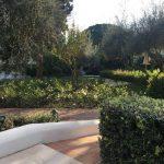 Oliven, Eisenholzbaum und Farne © Isabelle van Groeningen