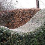 Winter Curves © Isabelle van Groeningen