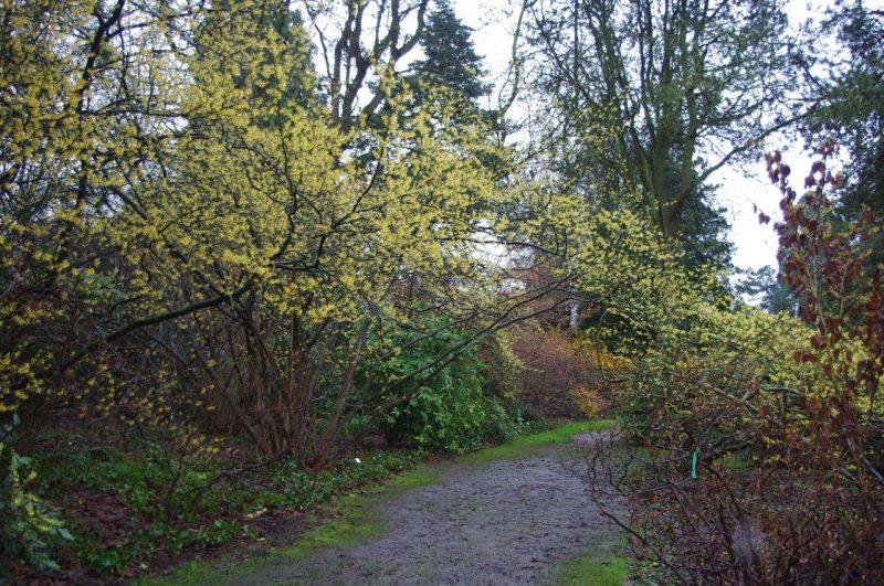 Arboretum Kalmthout © Isabelle van Groeningen