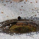 Badende Amsel im Japanischer Garten © Isabelle van Groeningen