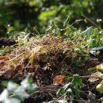 Compostmaterial © Isabelle van Groeningen
