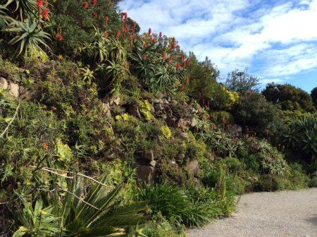 Tresco Abbey Garden Scilly Isles © Isabelle van Groeningen