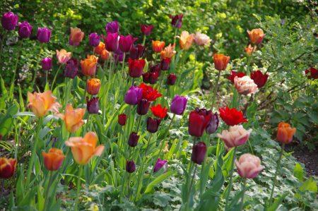 Boudoir Mischung Frühjahrszwiebeln © Isabelle van Groeningen
