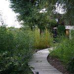 Willow planting © Isabelle van Groeningen