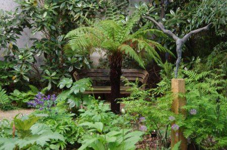 Podophyllum left of treefern - shade plants © Isabelle van Groeningen