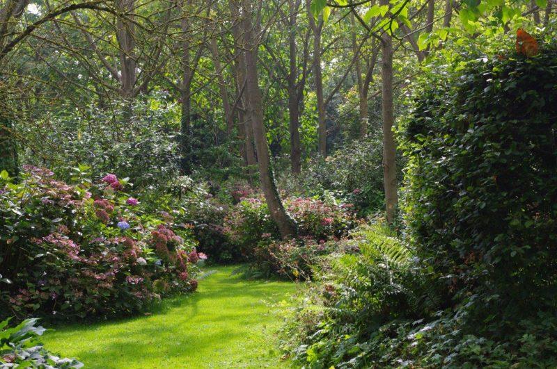 Paulownia Wald Jardin Shamrock © Isabelle van Groeningen