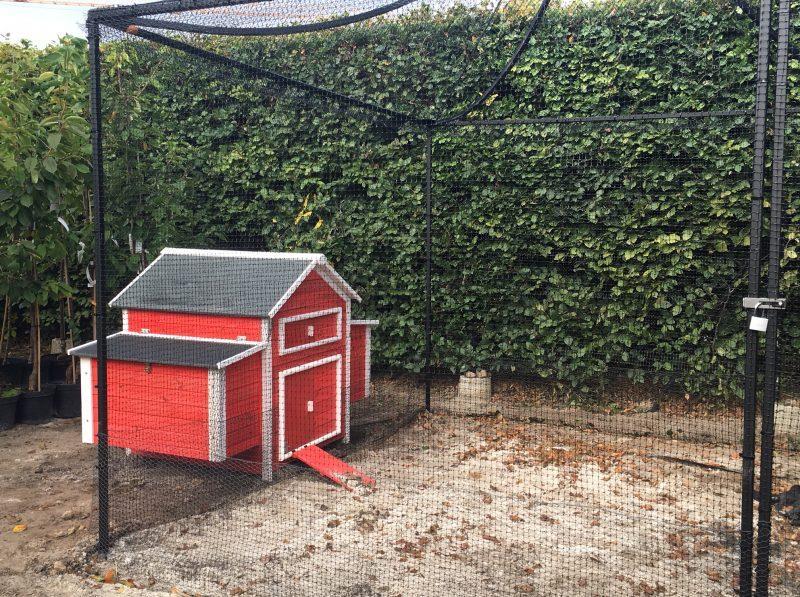 Sweet sweet home - chickens © Isabelle van Groeningen