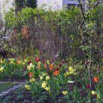 Frühlingsfreude © Isabelle van Groeningen