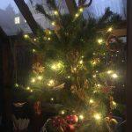 Mein Weihnachtsbäumchen © Isabelle van Groeningen