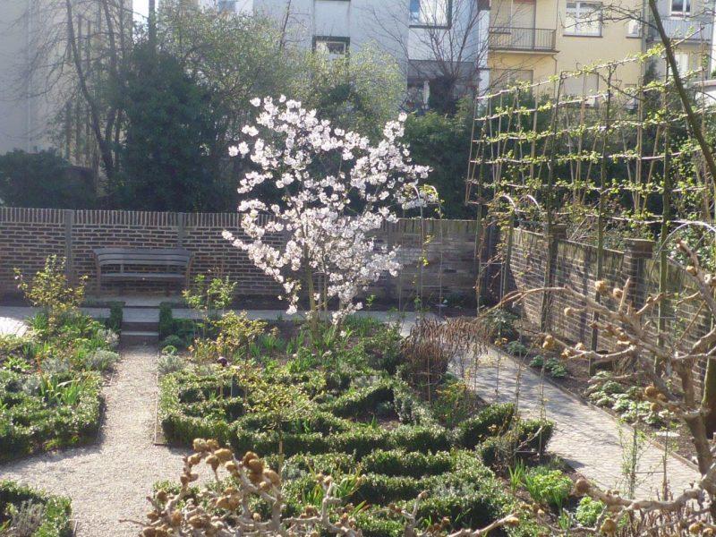 Prunus yedoensis © Isabelle van Groeningen