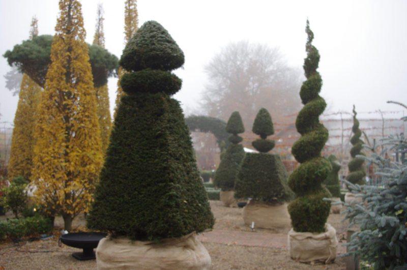 Fastigiate Hornbeam with Yew topiary © Isabelle van Groeningen