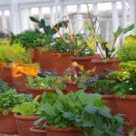 Gemüsepflanzen © Isabelle van Groeningen