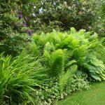 Beth Chatto Garten grünes Laub © Isabelle van Groeningen