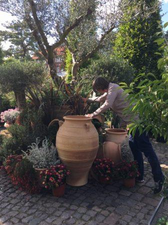 Sommerthema Griechenland in der Gartenakademie