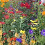 Chatsworth Flower Show 2019 - Sommerliche Rabatten © Isabelle van Groeningen