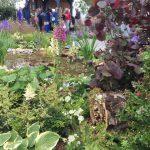 Chatsworth Flower Show 2019 - Der bienenfreundliche Garten © Isabelle van Groeningen
