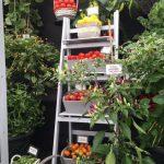 Robinson Gemüse Saatgut © Isabelle van Groeningen