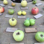 Äpfel - italienische Gartenkultur © Isabelle van Groeningen
