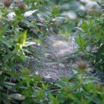 Spider net © Isabelle van Groeningen