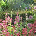 Kentranthus ruber - self seeders© Isabelle van Groeningen