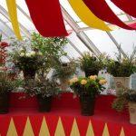 Adventsausstellung in der Königlichen Gartenakademie © Isabelle van Groeningen