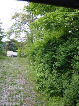Parkplatz der Gartenakademie in 2005, bevor Bau-anfang: eine grüne Wand © Isabelle van Groeningen