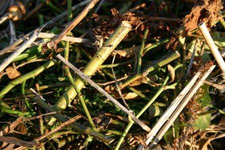 Alles kleingeschnibbelt - Kompost © Isabelle van Groeningen