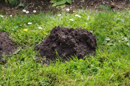 Vole or mole