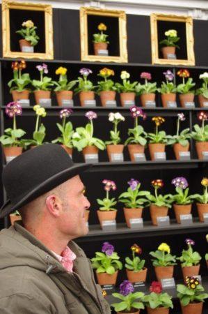 Aurikel Spezialisten: Eine der viele kleine spezialisierten Gärtnereien © Isabelle Van Groeningen