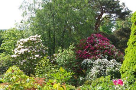 Glenarn Rhododendron © Isabelle van Groeningen