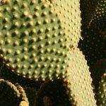 Jardin Majorelle Cactus © Isabelle van Groeningen