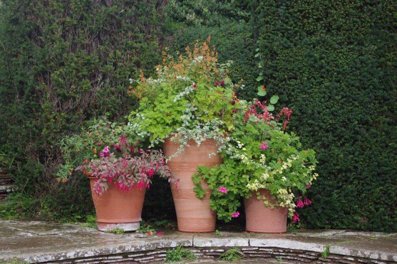 Kübelbepflanzung © Isabelle Van Groeningen