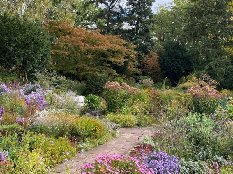 Senk Garten Leucanthemella serotina © Isabelle Van Groeningen
