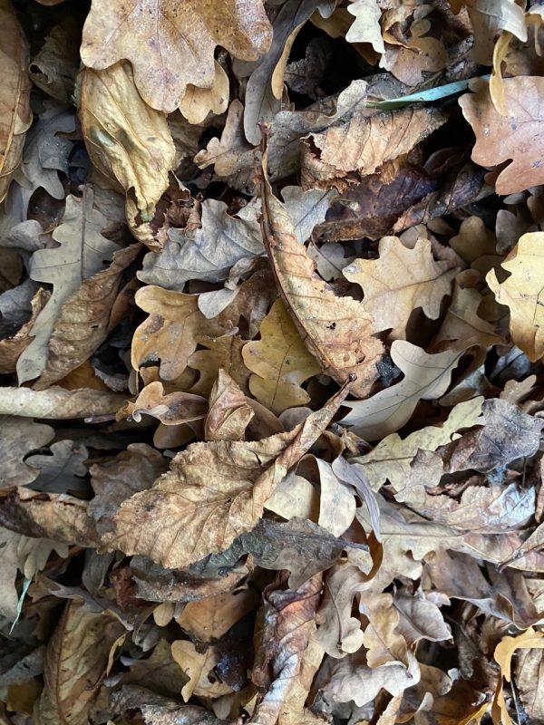 Kastanienblätter entsorgen © Isabelle Van Groeningen