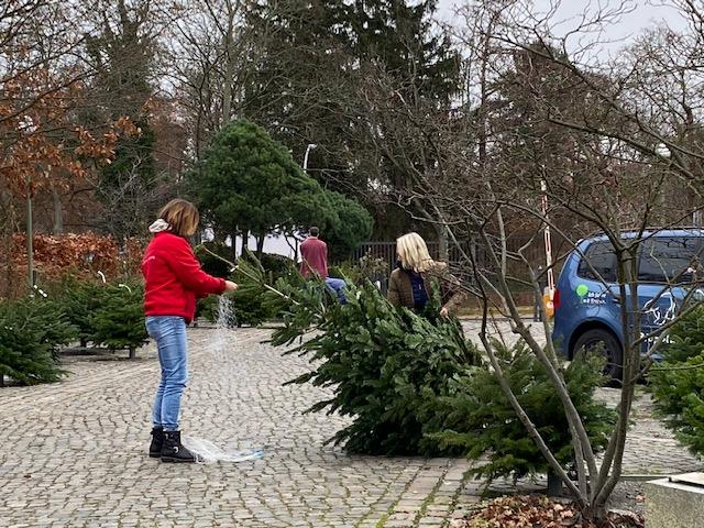 Die letzte Weihnachtsbäume © Isabelle Van Groeningen
