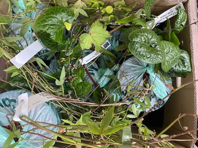 Passiosblumen für den Mittelgang © Isabelle Van Groeningen