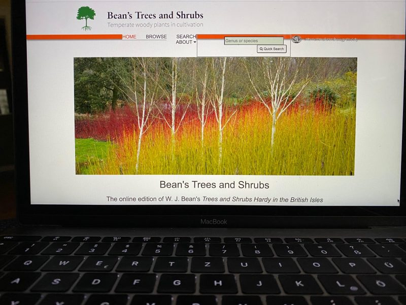 Planung - Beans, Trees & Srubs © Isabelle Van Groeningen