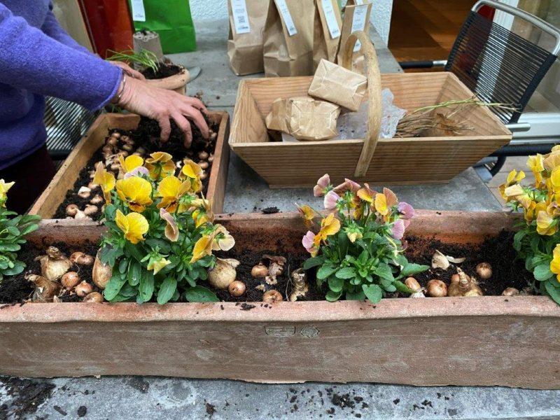 Container-Bepflanzung - Frühlingsvorbereitungen © Isabelle Van Groeningen