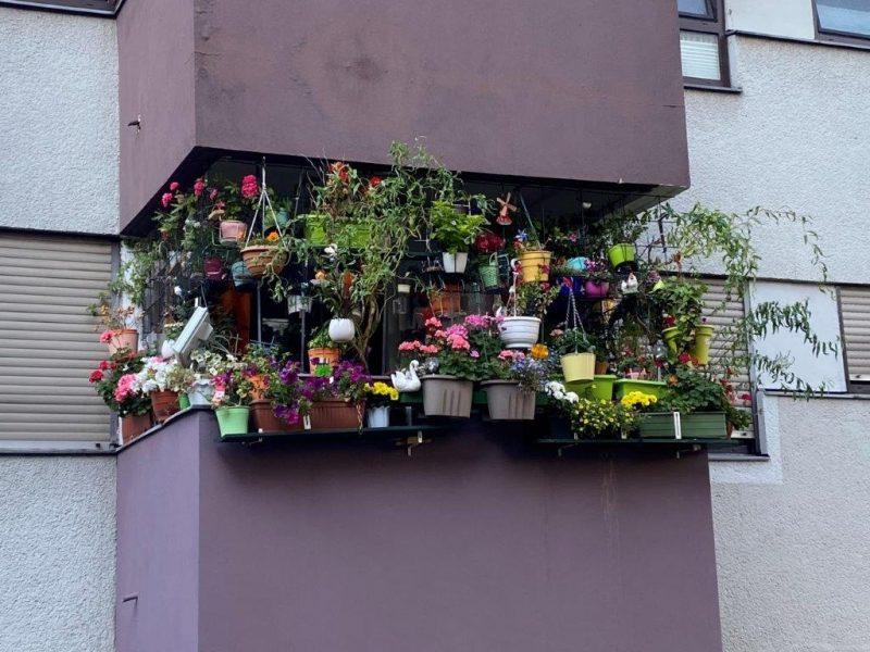 Container-Bepflanzung - Sichtschutz © Isabelle Van Groeningen