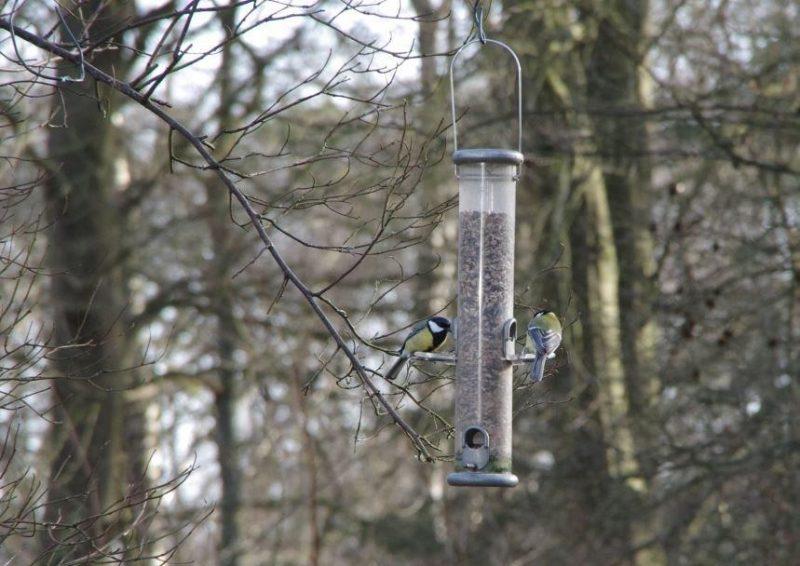 Vögel im Garten - Kohlmeisen © Isabelle Van Groeningen