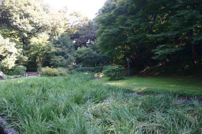 Meiji Jingu Garden, Tokyo-Iris garden © Isabelle Van Groeningen